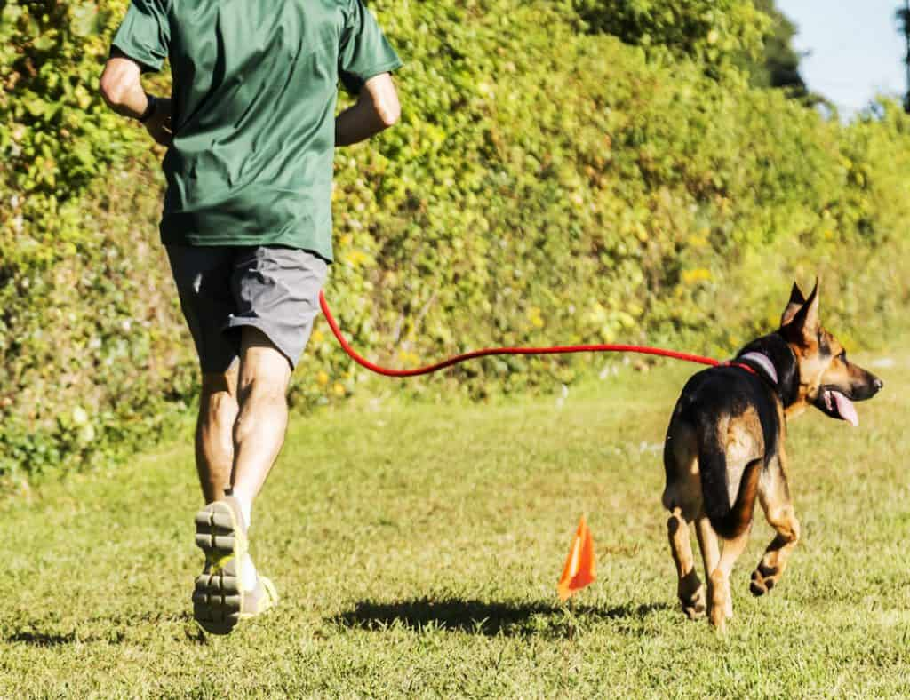 A man is running with his dog on a very sunny day at a local park.